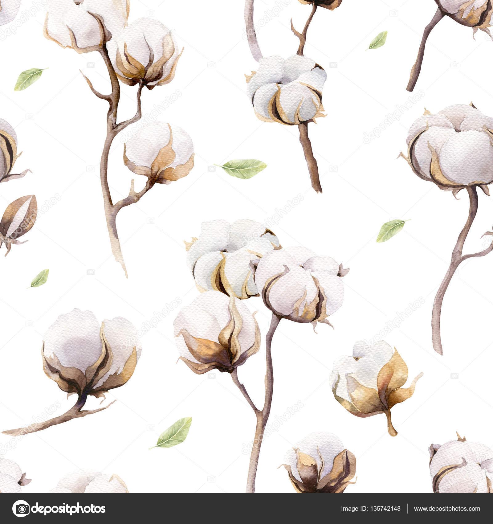 Rameaux Et Fleurs De Coton Photographie Mykef C 135742148