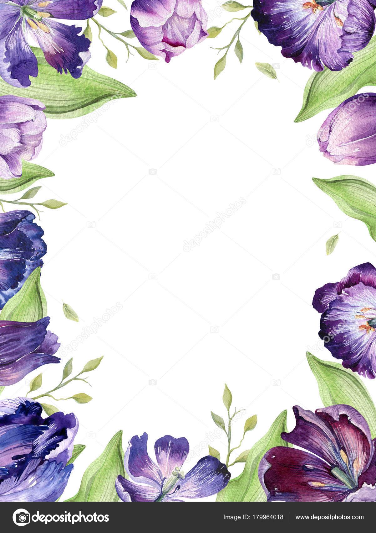水彩の花チューリップの背景。カラフルな春イラストを分離しました。水彩