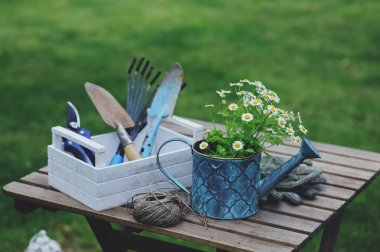 Garden work still life in summer. Camomile flowers, gloves and toold on wooden table outdoor in sunny day with flowers blooming on background. stock vector