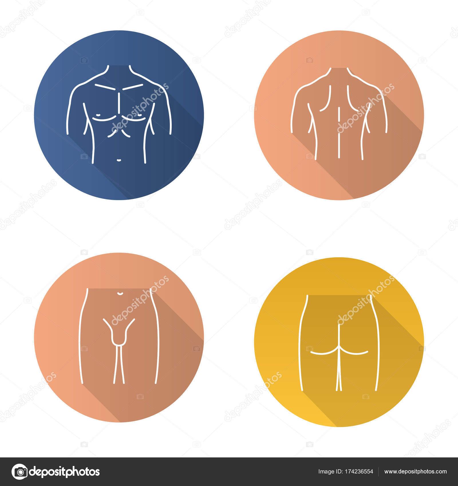 Männliche Körperteile Symbole — Stockvektor © bsd #174236554