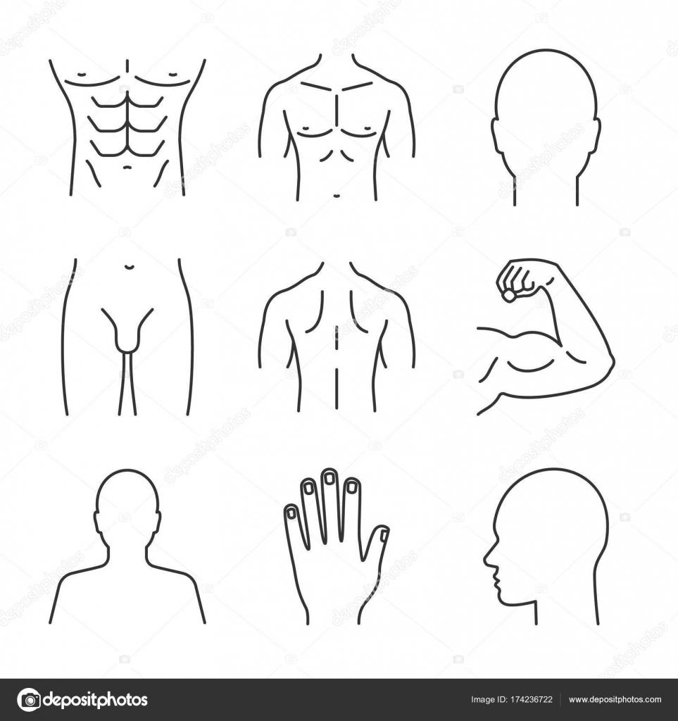 Männliche Körperteile Icons Set — Stockvektor © bsd #174236722