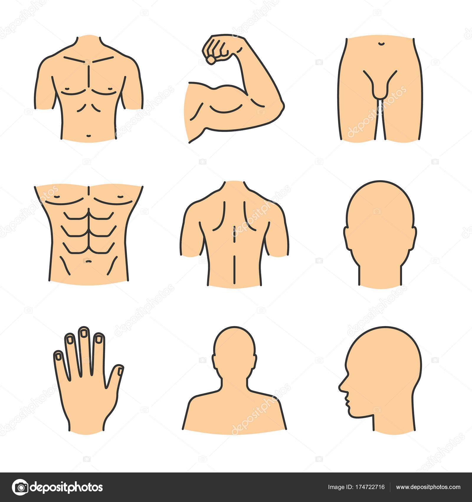 Männliche Körperteile Icons Set — Stockvektor © bsd #174722716