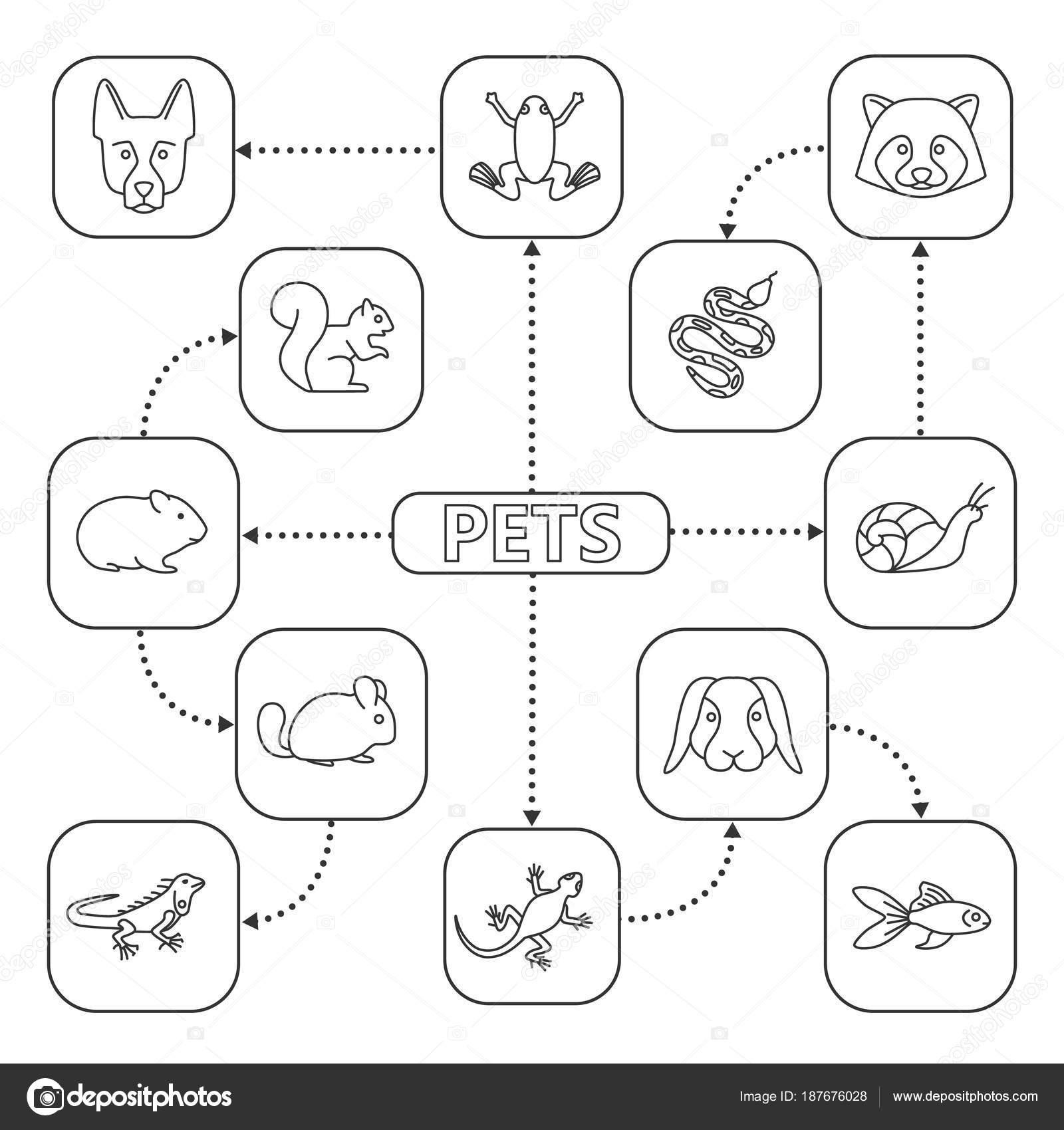 Diagrama De Animales Domesticos Mascotas Mapa Mental Con