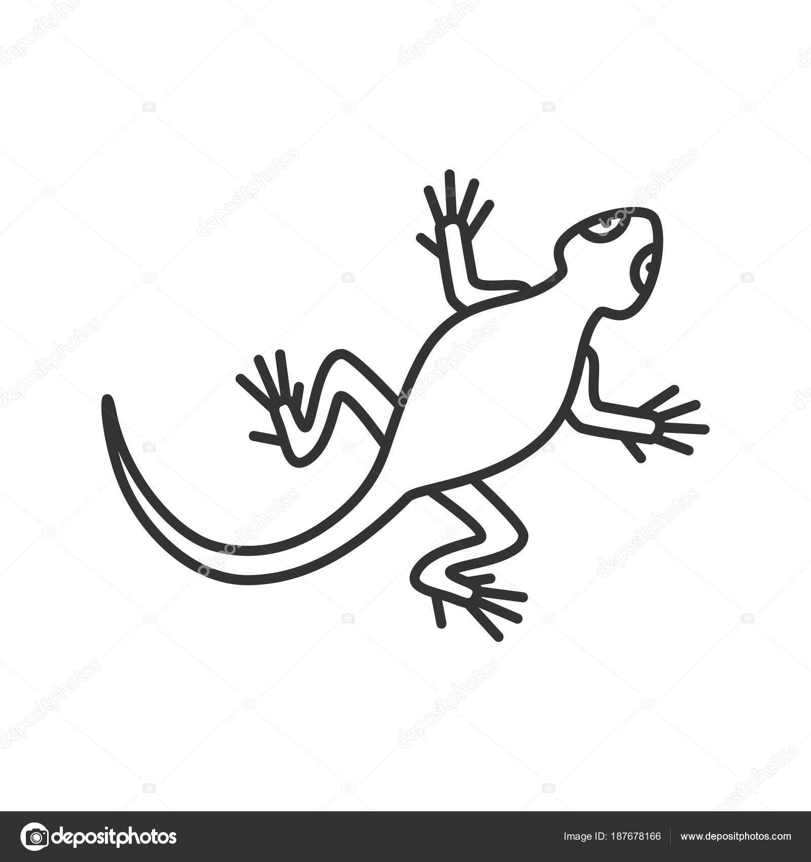 Icône Linéaire Lézard Illustration Ligne Mince Salamandre Symbole Contour Vector — Image ...