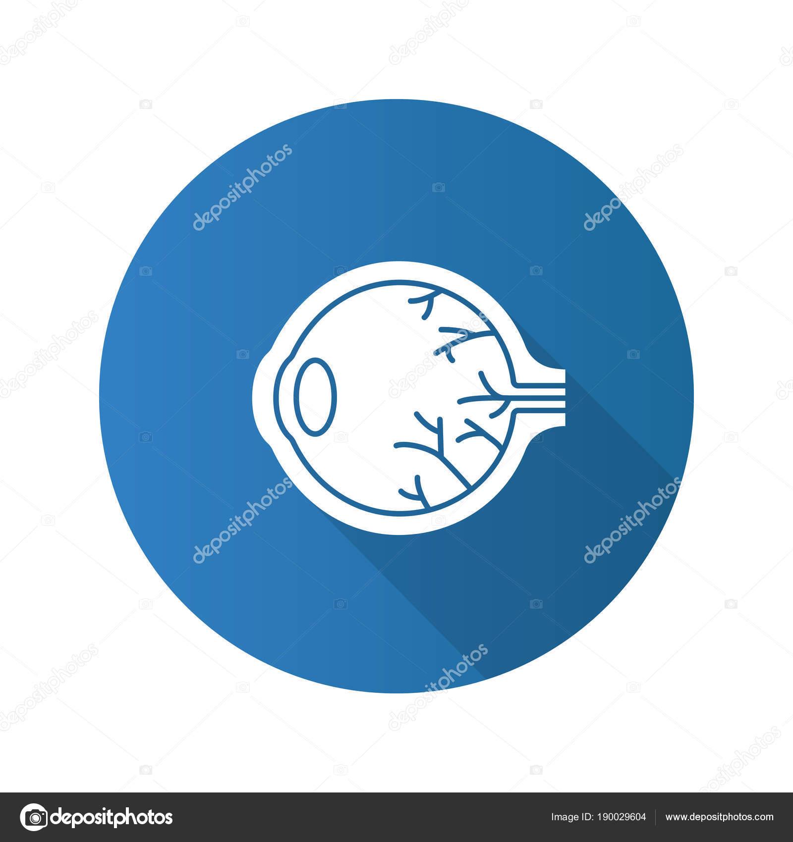 Ilustración de silueta de anatomía de ojo — Vector de stock © bsd ...