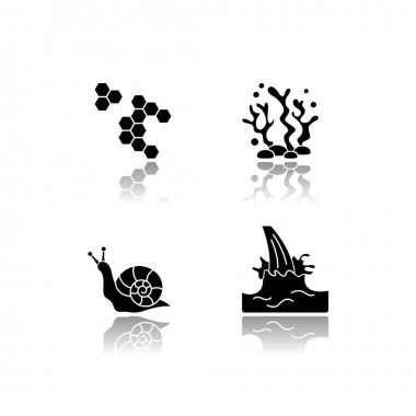 Cosmetic ingredient drop shadow black glyph icons set. Propolis, honey comb. Seaweed underwater. Snail mucin. Milk extract. Cosmetology, dermatology. Isolated vector illustrations on white space icon