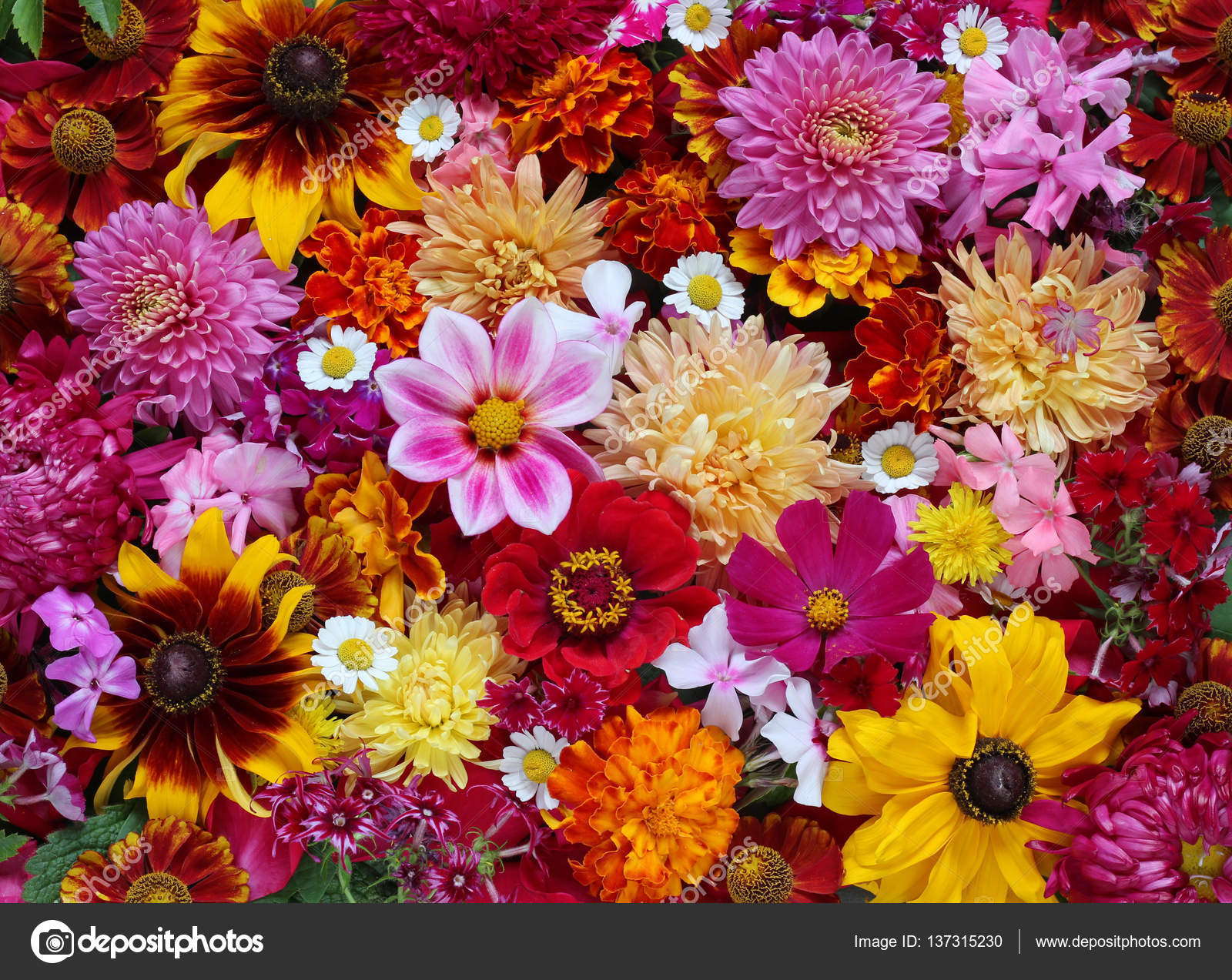 Background of garden flowers, top view. \u2014 Stock Photo