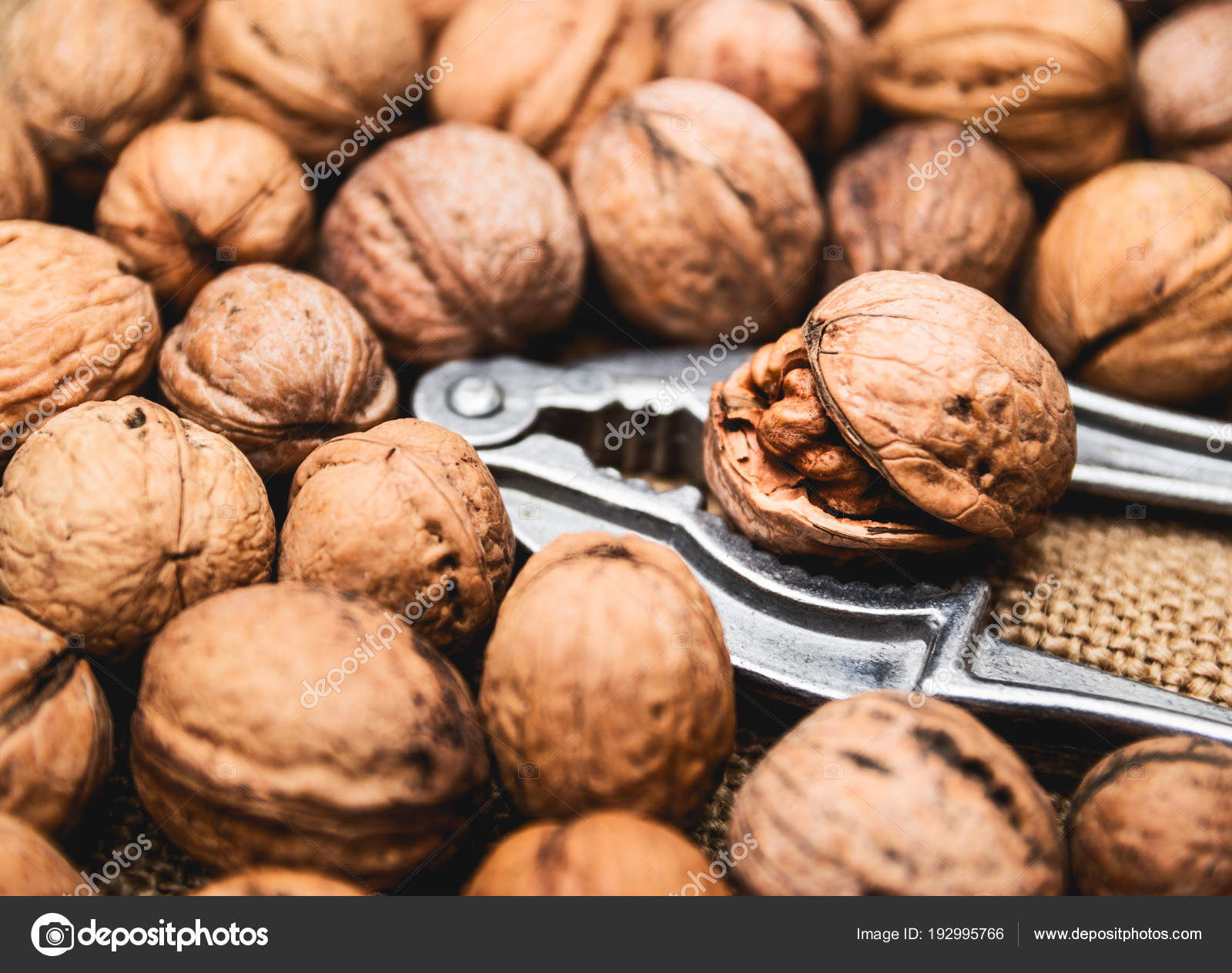 Fresh uncleaned in the shell organic walnuts with nut