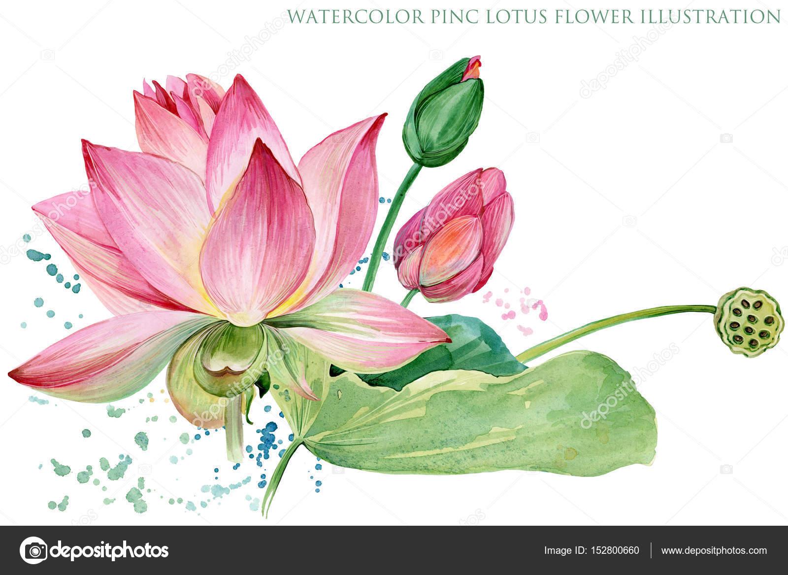 Lotus Flowers Seamless Pattern Watercolor Botanical Illustration