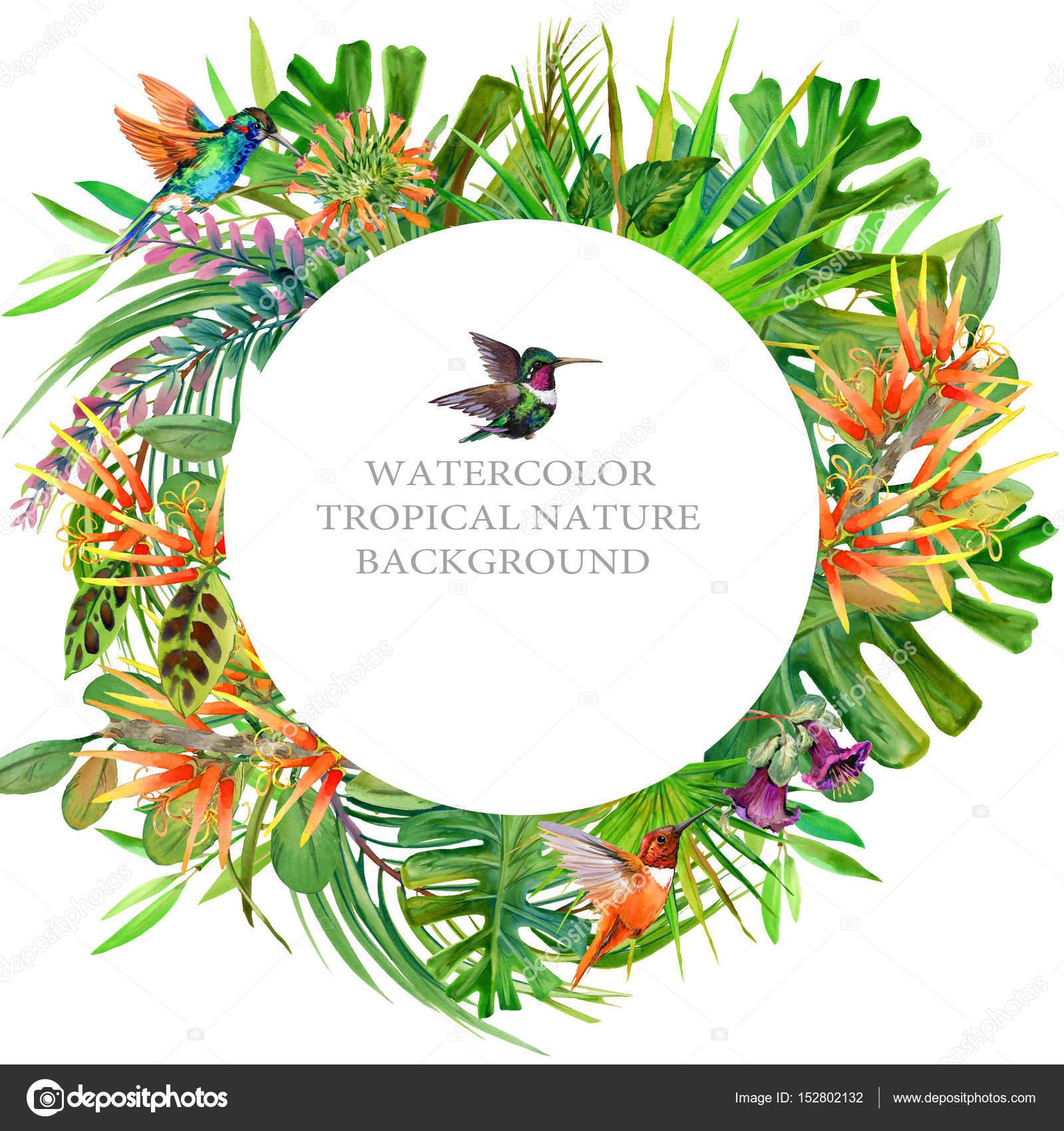 wunderschöne tropische Natur Rahmen. exotische Blumen Hintergrund ...