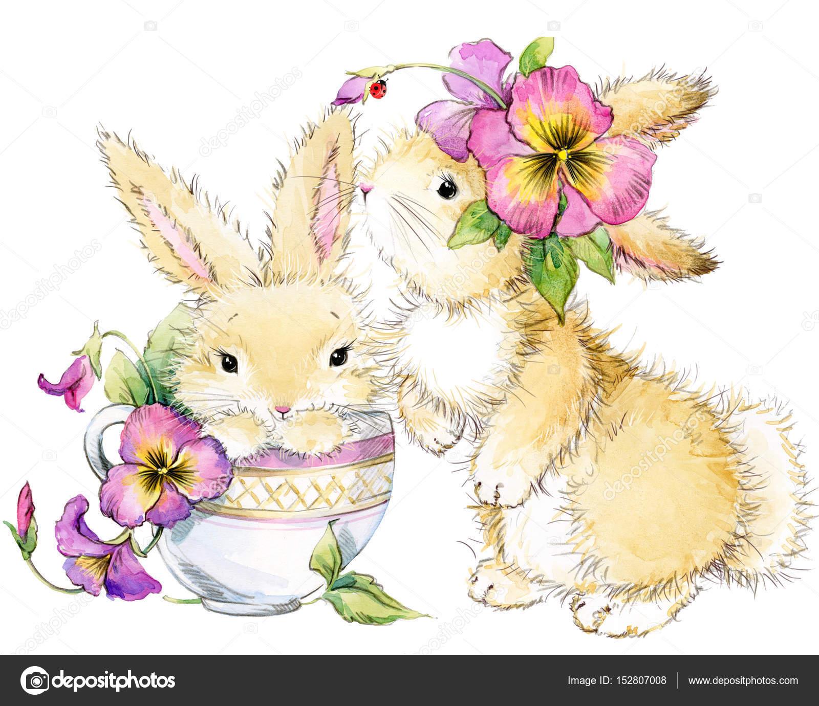 かわいいうさぎ。ウサギの水彩画イラスト \u2014 [著者]の写真 dobrynina_art