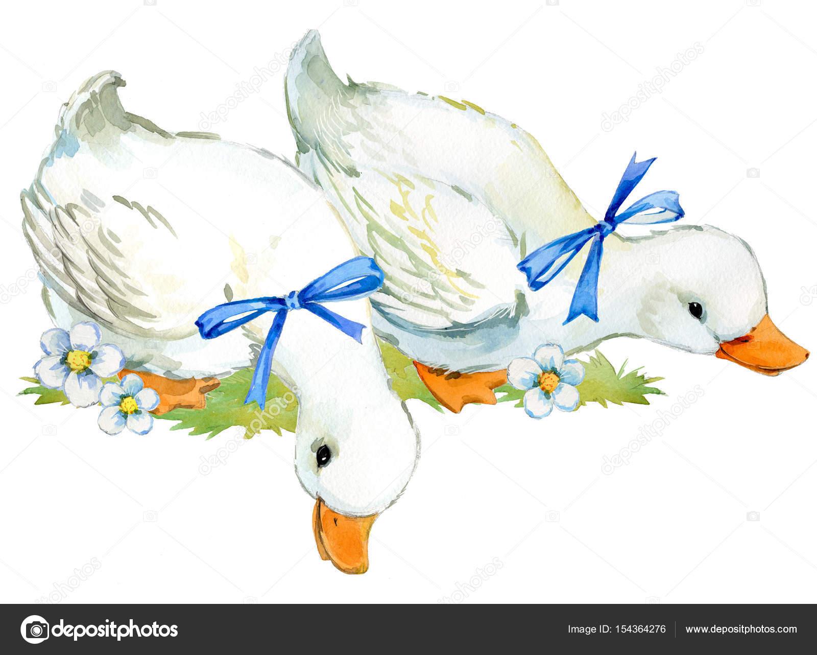 かわいいアヒル国内ファーム鳥水彩イラスト ストック写真