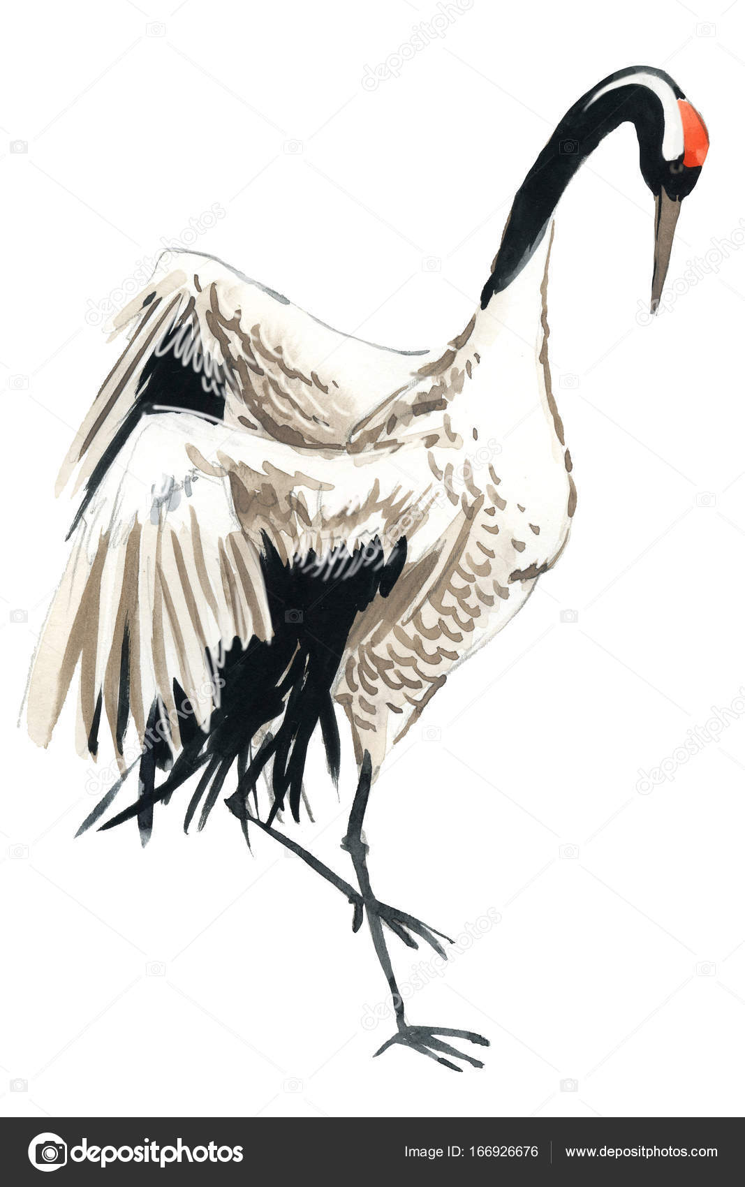 Watercolor crane bird — Stock Photo © dobrynina_art #166926676