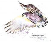Sněžná sova akvarel ilustrace. Polární pták