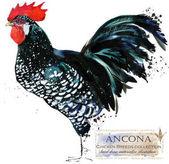 Chov drůbeže. Kuřecí plodí série. domácí farmu pták akvarel ilustrace