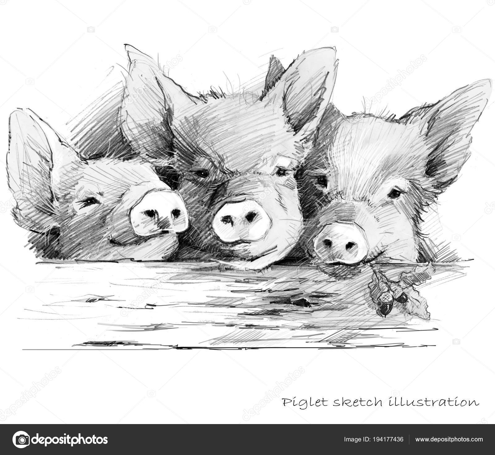 Roztomile Prasatko Prase Rucne Kreslenou Tuzkou Nakres Ilustrace