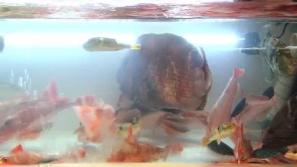Movimiento De Peces De Mar Vivo En El Tanque Con Agua De Mar En El Mercado De Pescado En Busán Corea
