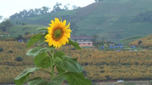 Pohled do oblasti Doi po Jam královské zemědělské stanice, Thajsko