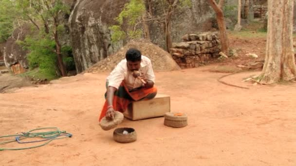 Snake charmer plays flute for the cobra sitting in the basket in Sigiriya,  Sri Lanka