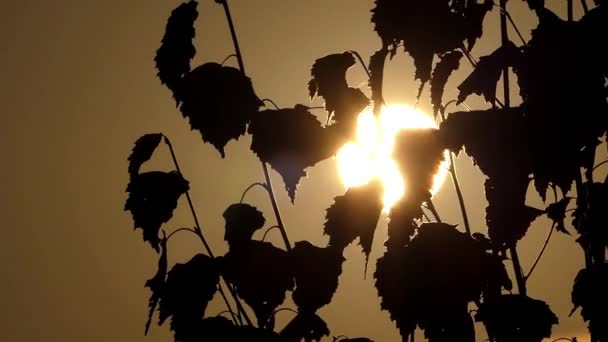 Silueta stromu kymácí ve větru při západu slunce.