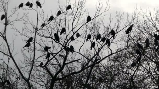 Havrani na větvích stromů v noci