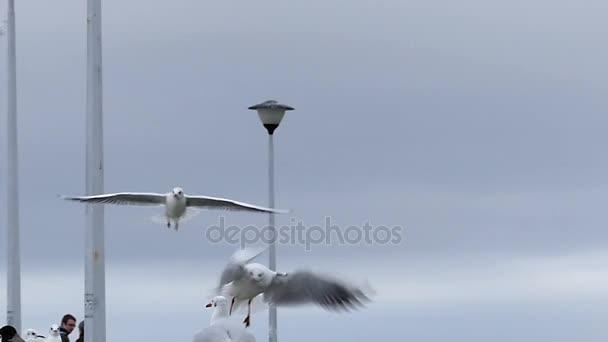Dívčí ruka házení chleba do racků létání nad Bílého moře molo s lidí na to zpomalené