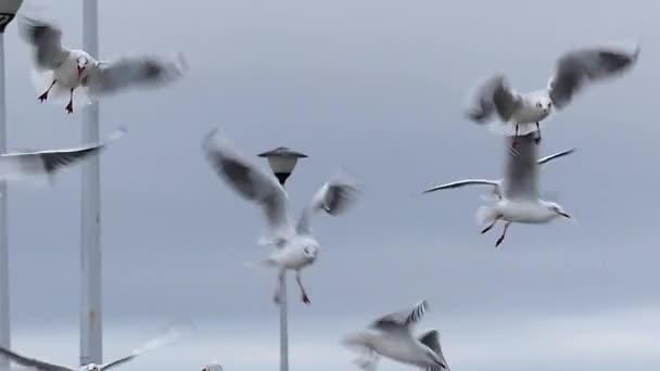 Dívčí ruka házení chleba pro racky letící nad bílým molo s lidmi ve zpomaleném záběru
