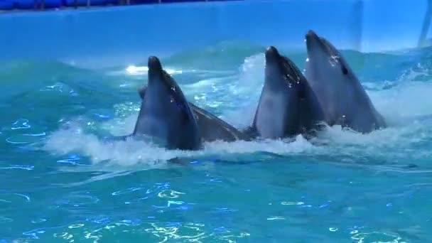 Vier Dolpnins schwimmen eine nach der anderen und halten Sie ihre Bulbous hoch leitet, als wären sie tanzen Lambada