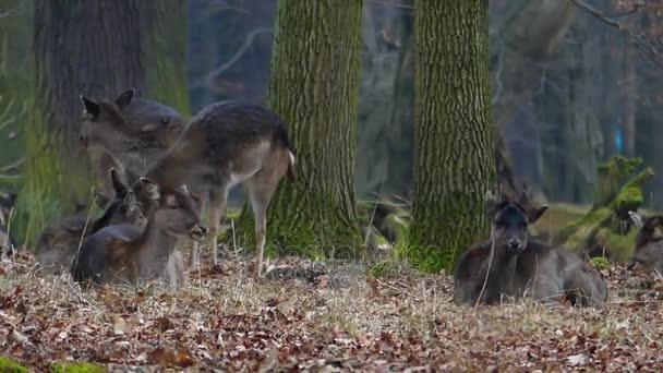 Szarvas nélkül Horn étkezést és a pihenésre a Park egy csoportja