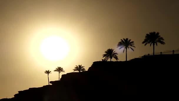 Krásná silueta palem při západu slunce v statický snímek