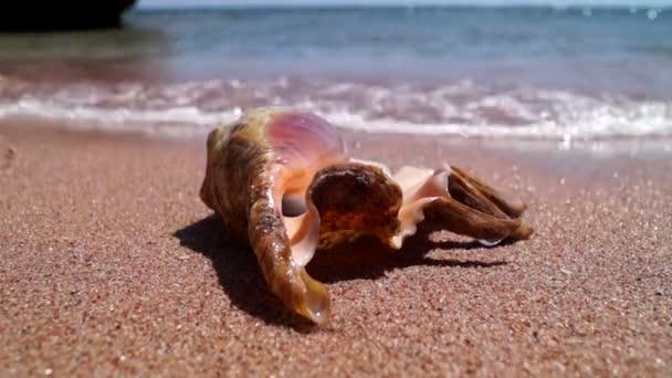 Krásné Shell klade na pláž a mořských vln s pěnou