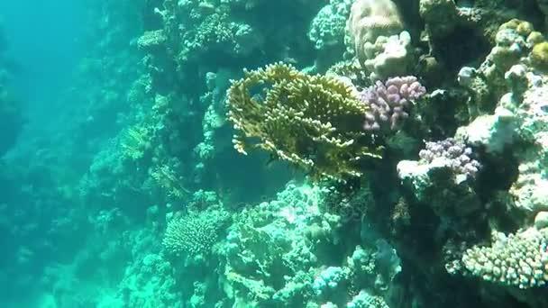 Vysoký útes v modrých vodách Rudého moře v Egyptě v za slunečného dne na jaře