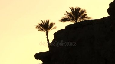 Two Exotic Palm Trees on a Rocky Seacoast in Egypt at a Splensid Sunset