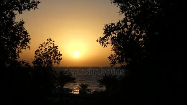 Exotic Palm Trees on a Rocky Seashore in Egypt at a Splendid Sunset in Spring