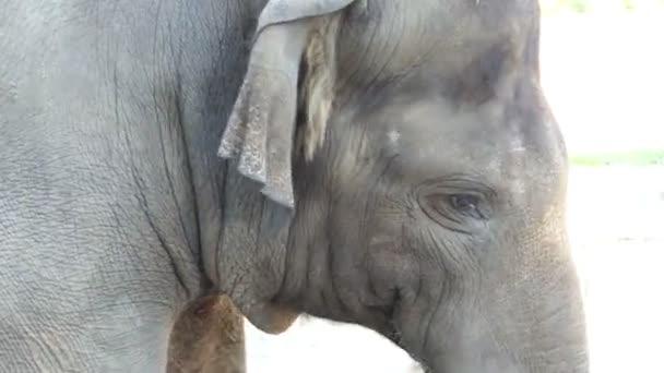 Velký šedý slon stojí v zoologické zahradě na slunečný den v létě