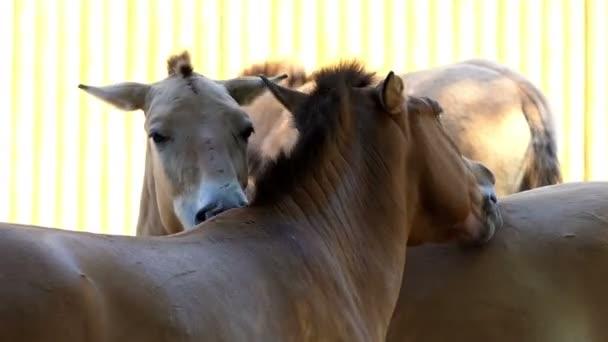Tři koně stát a vzájemně hladit v Zoo, v létě