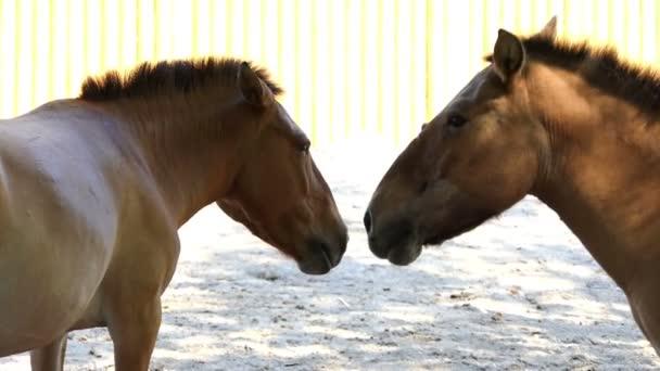 Két barna ló összenéz romantikusan az állatkertben