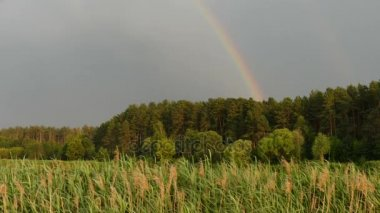Beautiful rainbow over forest.