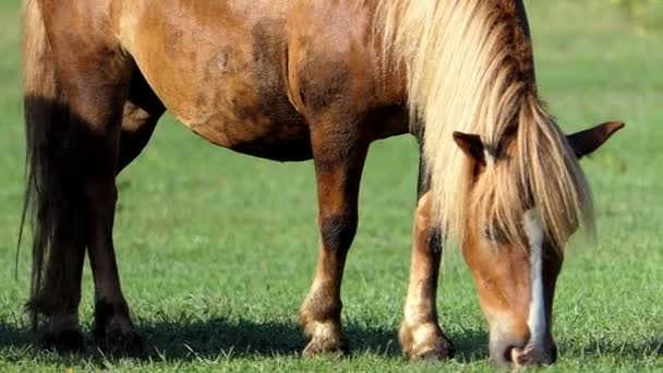 Risultati immagini per prato con cavalli che brucano