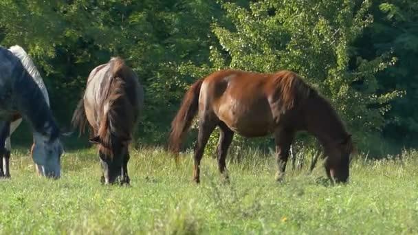 Čtyři spásání trávy koně na trávníku v létě