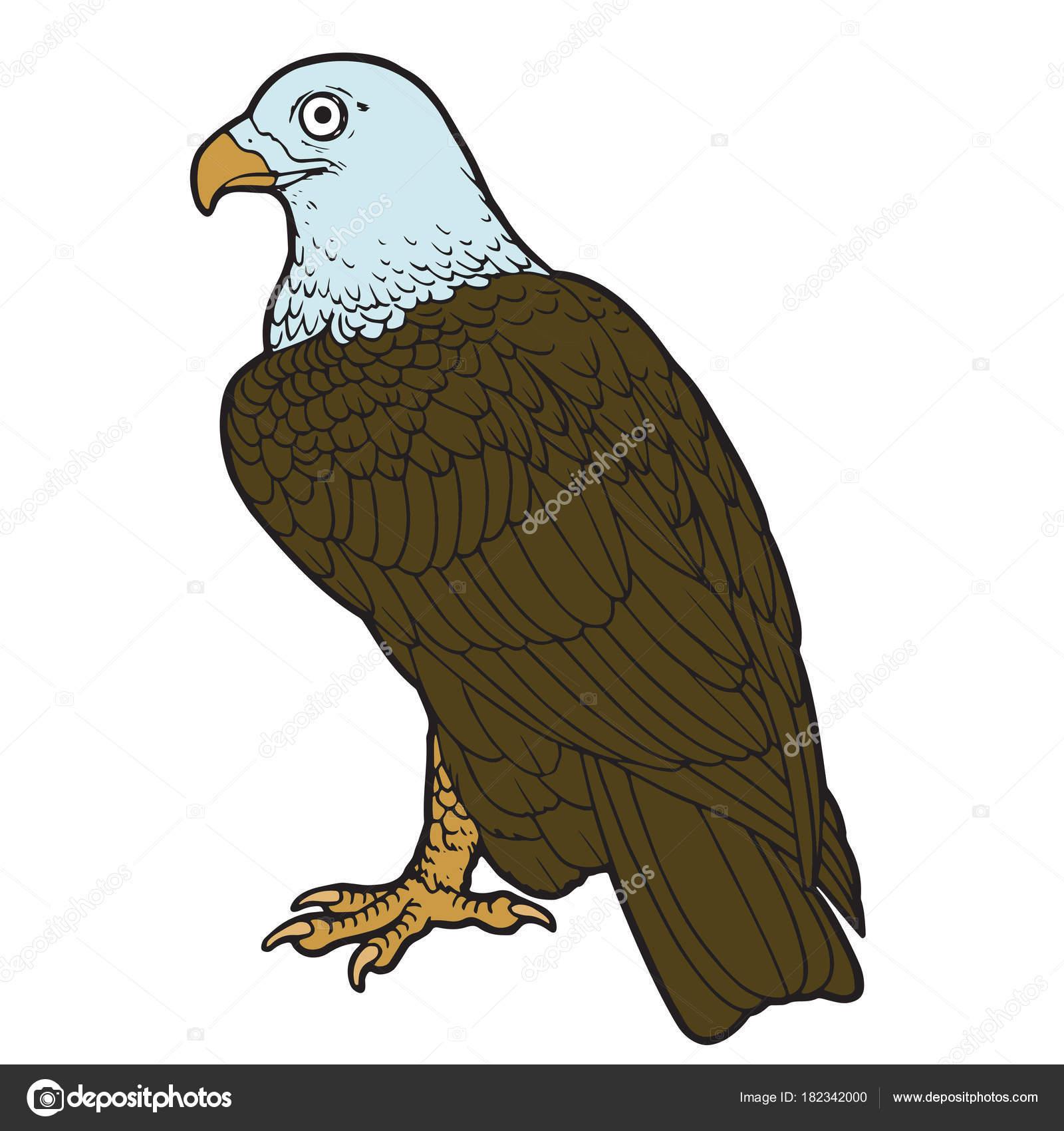 Impresiones Águila Dibujos Animados Sobre Fondo Blanco Para Los ...