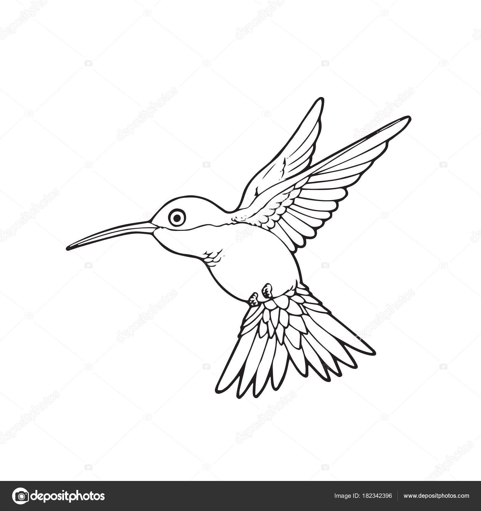 Animado Colibri Para Colorear Impresiones Dibujos