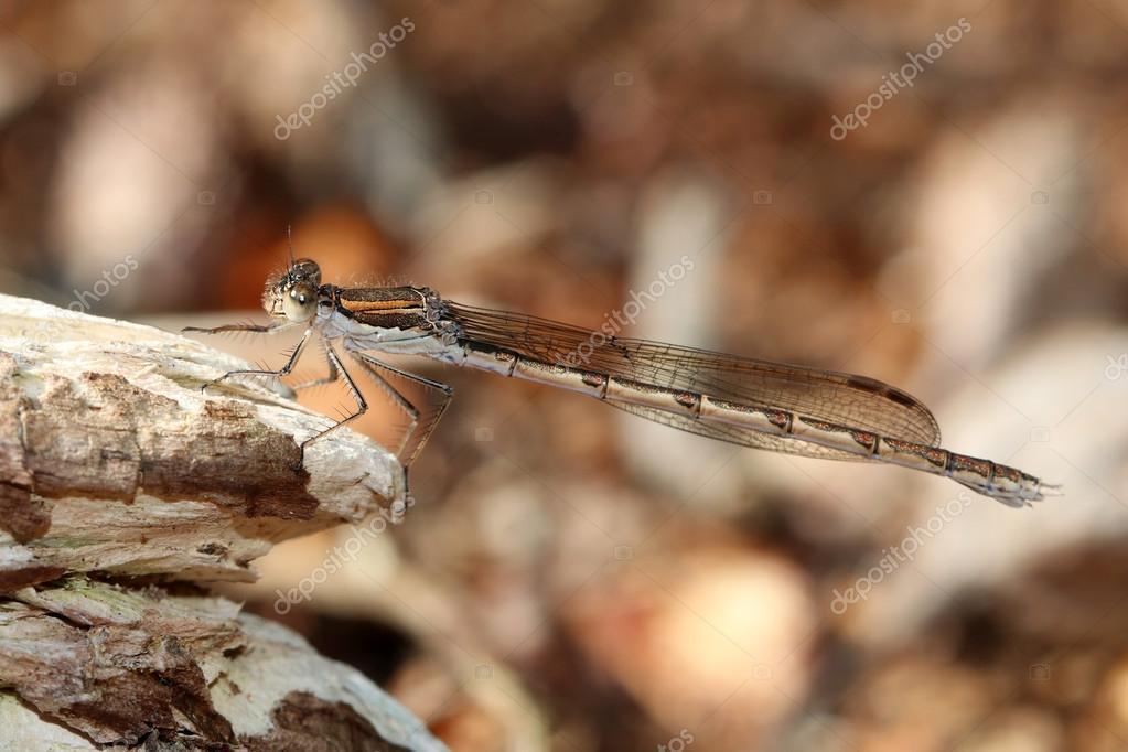 dragonfly sitting on branch