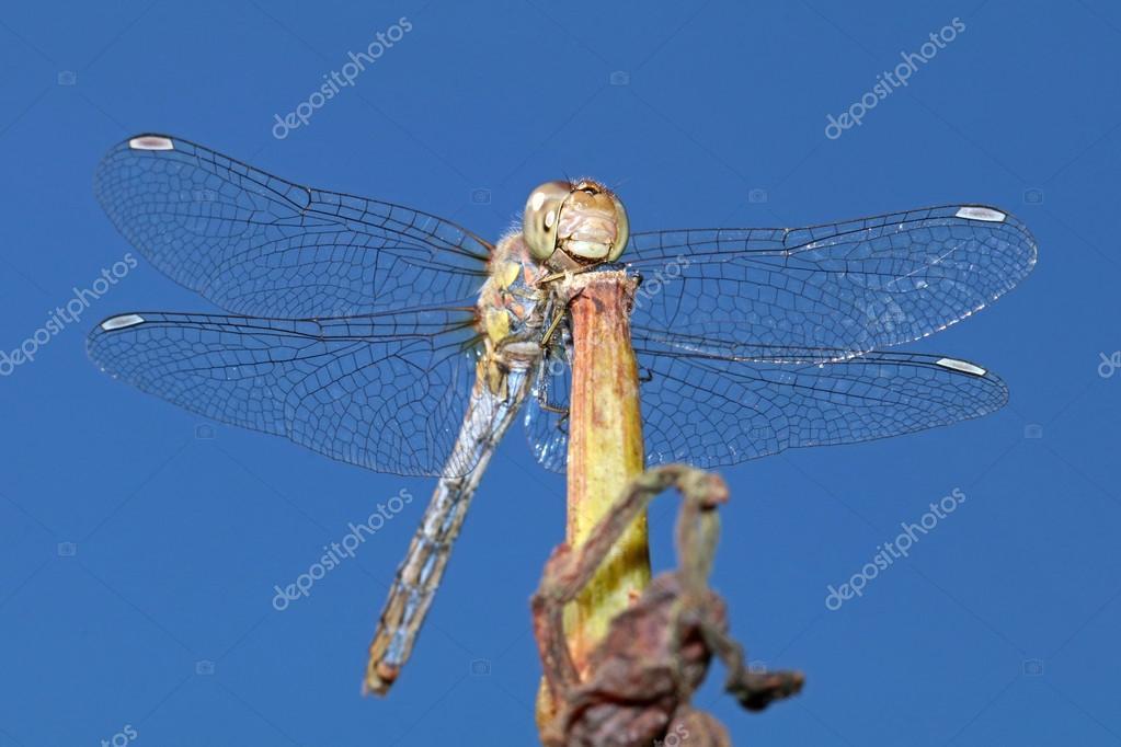 dragonfly sitting on plank