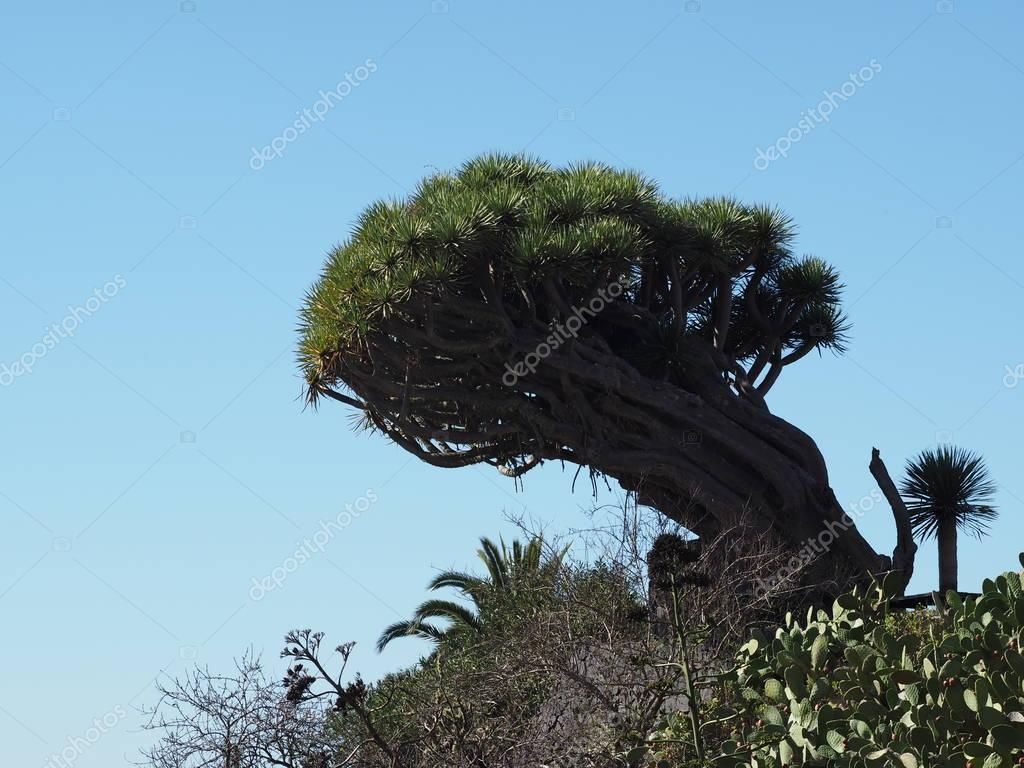 flora on  canary island