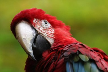 beautiful Macaw parrot