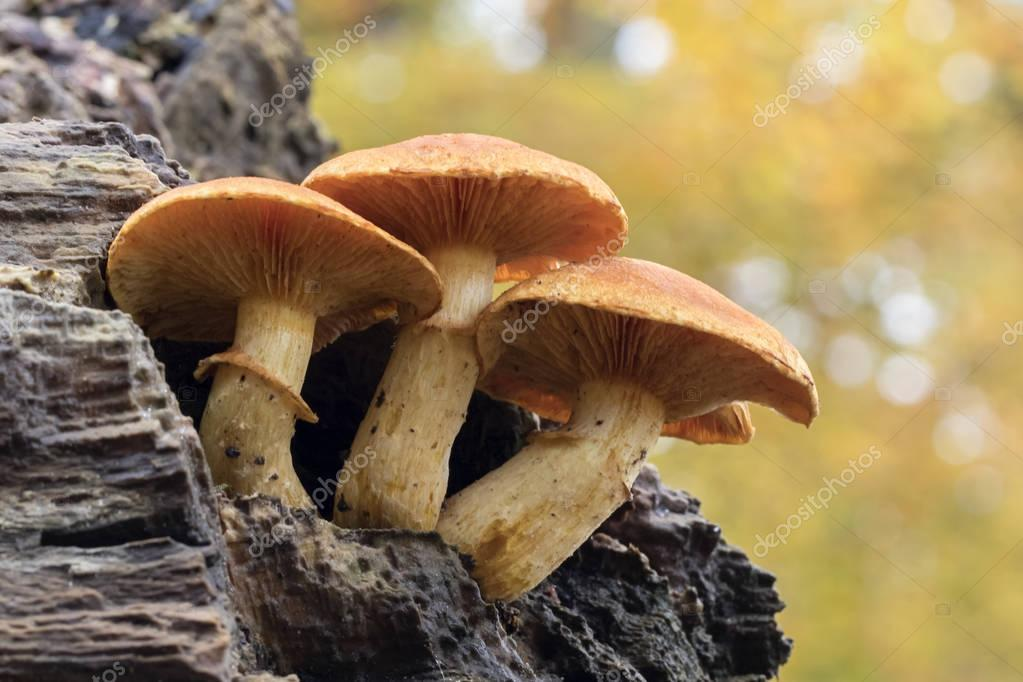 photo of Mushroom in forest