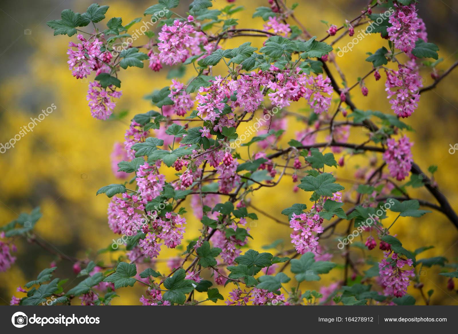 piante fiorite di primavera