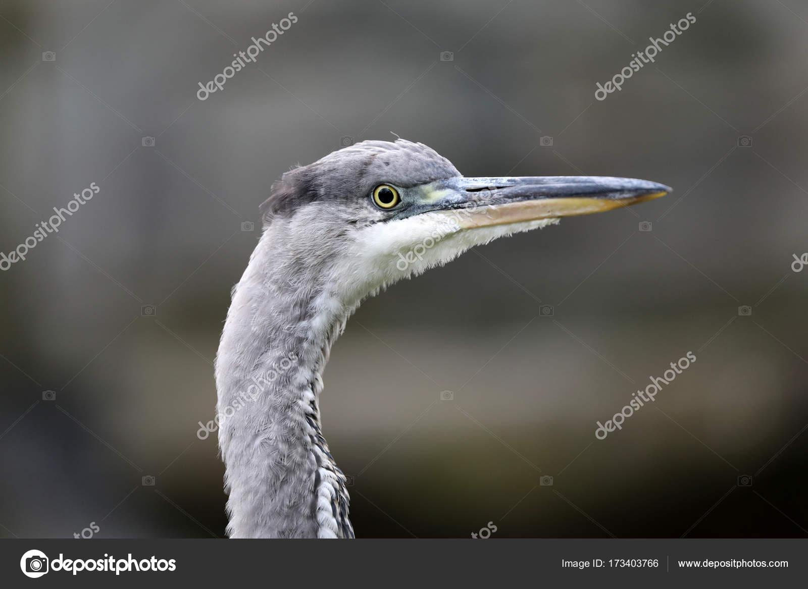 Διπλό μεγάλο πουλί
