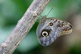 Bagoly pillangó egy fa, zár-megjelöl kilátás